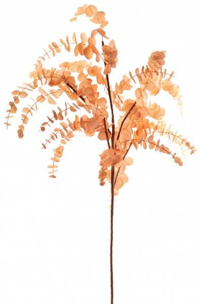 Kvist med eucalyptus nude