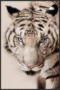 Bilde av Bilde Tiger beige 60x90cm